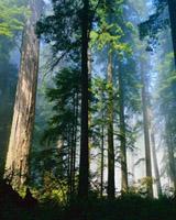 Лесной кодекс